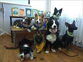 Собаки-адвенторы.Псков