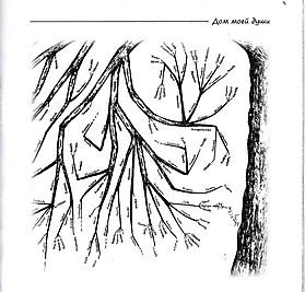 Генеалогическое древо рода Агарханянов